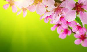 粉红色的花朵微距特写摄影高清图片