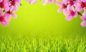 青青草与粉红色的花朵摄影高清图片