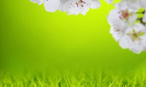 白色花朵与茂密的草丛摄影高清图片