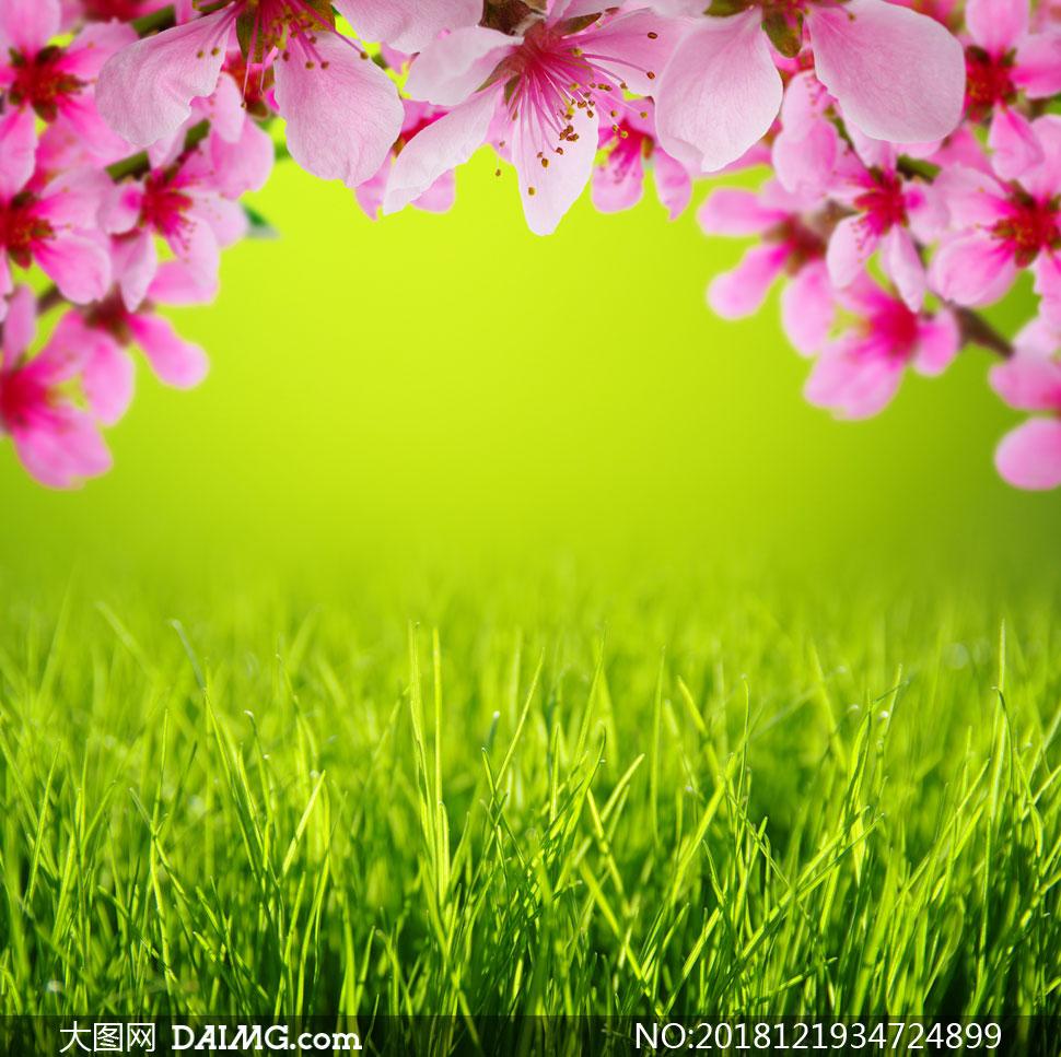 草亚洲色图_青青草与粉红色的花朵摄影高清图片