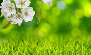 白花青草背景光斑效果摄影高清图片