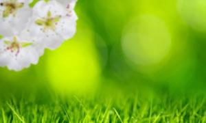 白色花与生长茂盛的青草丛高清图片