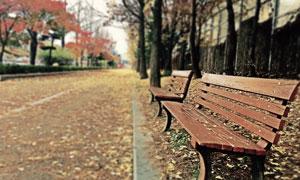 秋天摆放在路边的长椅摄影高清图片