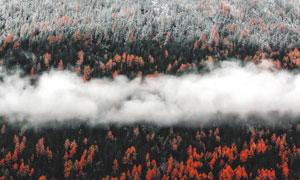 一片红树林上空的白云摄影高清图片