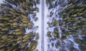 树林与冰雪覆盖的道路摄影高清图片