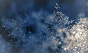 晶莹水珠草丛梦幻光斑摄影高清图片