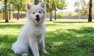 草地上蹲着的可爱小狗摄影高清图片