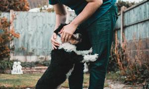 得到主人宠爱的小狗狗摄影高清图片