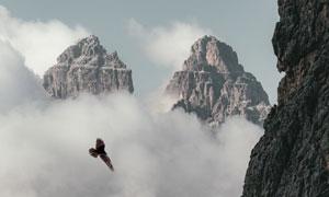 翱翔于群山之间的老鹰摄影高清图片
