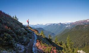 蓝天山谷树木植被风光摄影高清图片