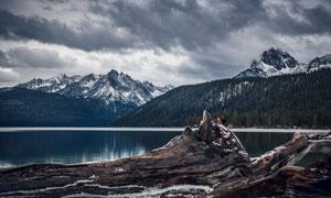 雪山树林与湖边的枯木摄影高清图片