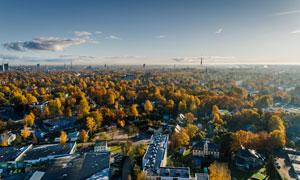 城市建筑物与树木景观摄影高清图片