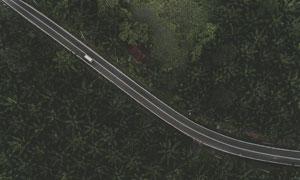 两边是茂密树林的道路摄影高清图片