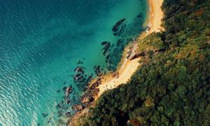 树木植物与碧绿的大海摄影高清图片