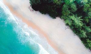 海水沙滩与郁郁葱葱的树林高清图片