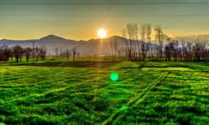 日出阳光下的树木草地摄影高清图片