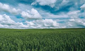 看不到边际的农场田地摄影高清图片