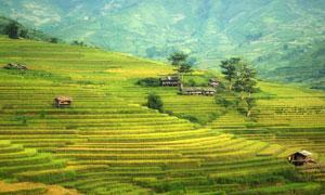 山坡上的梯田景观风光摄影高清图片