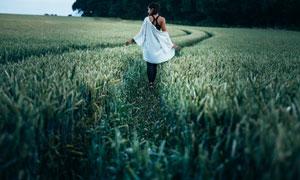 农田里颗粒饱满的麦穗摄影高清图片