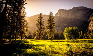 高山树木草地风景逆光摄影高清图片