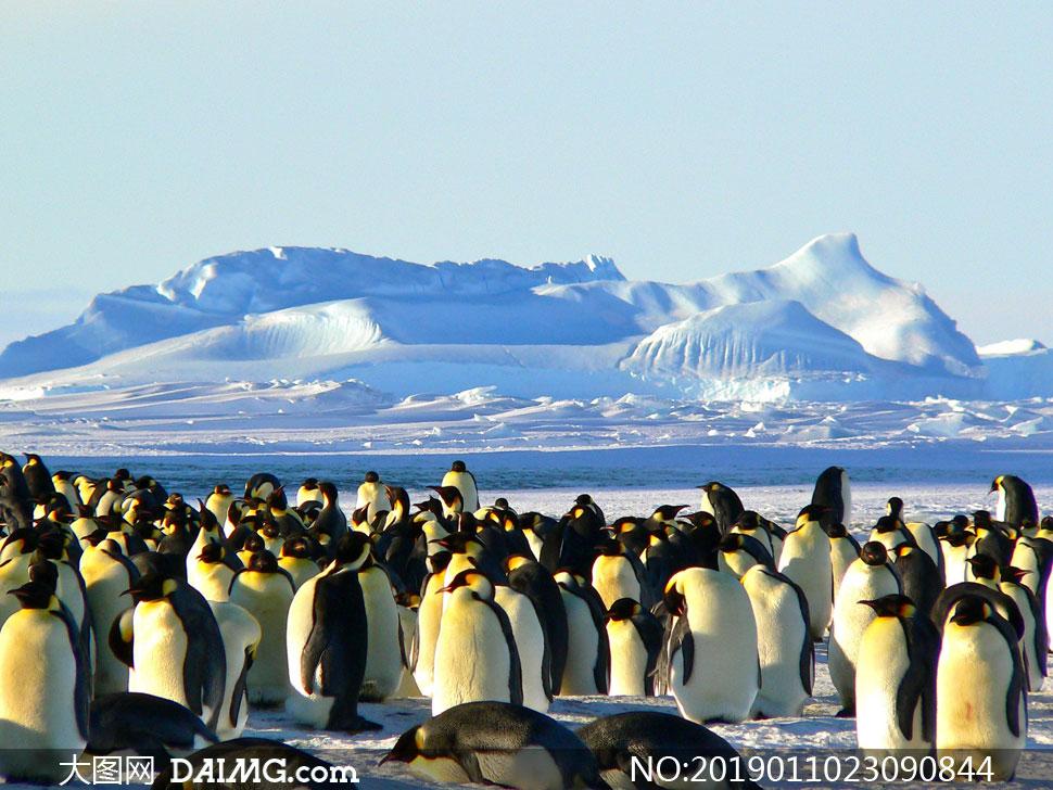 冰山与聚集一起的企鹅摄影高清图片