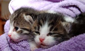 挤在一个窝里睡觉的小猫咪高清图片