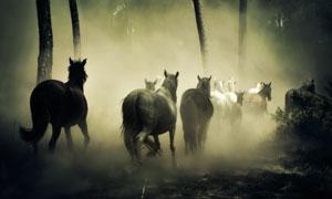 迷雾森林中奔跑的马群摄影高清图片