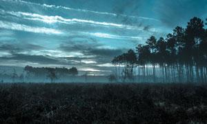 傍晚雾气弥漫着的树林摄影高清图片