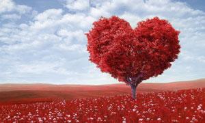 红色心形树冠大树创意摄影高清图片