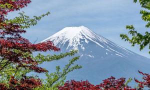 在樹枝映襯中的富士山攝影高清圖片