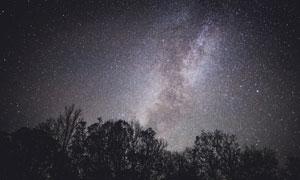 树林与点点繁星的夜空摄影高清图片