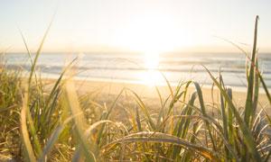 海边沙滩草丛风景逆光摄影高清图片