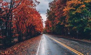 公路旁的秋天树木风光摄影高清图片