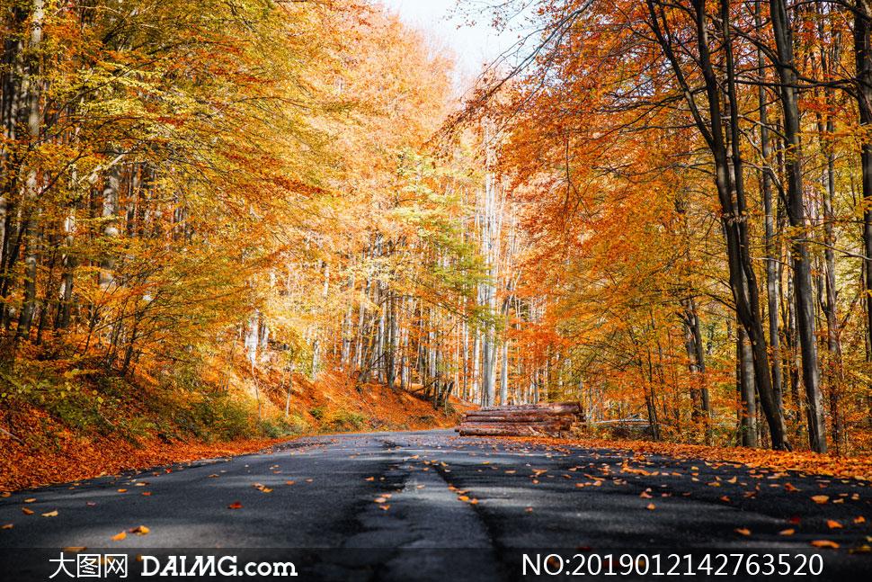 秋天时树叶凋零的树林摄影高清图片