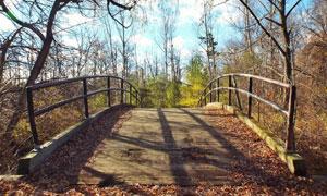 蓝天白云树林小桥风光摄影高清图片