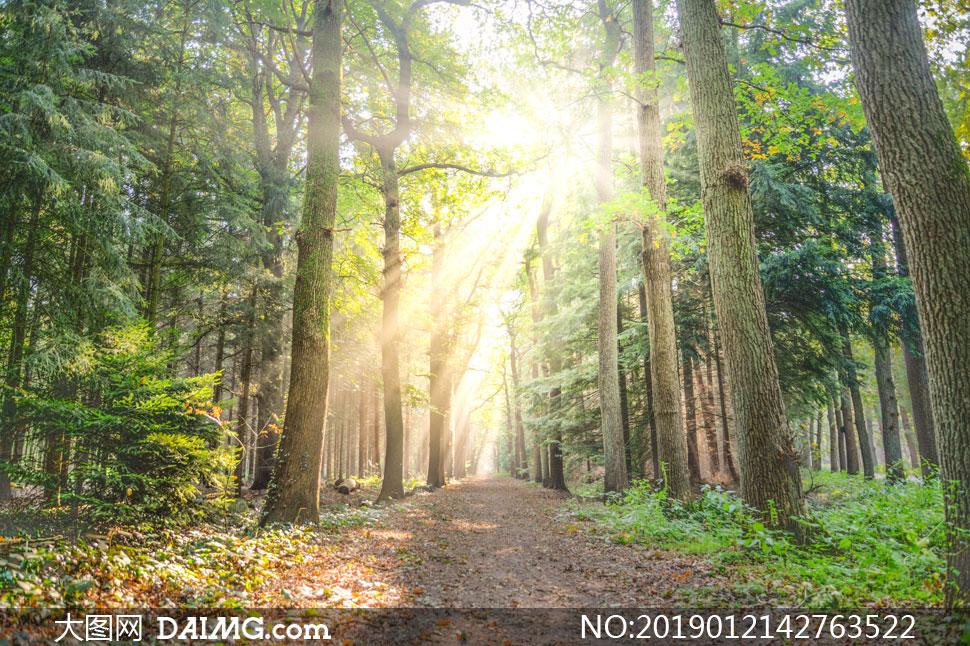 树林间的小路自然风光摄影高清图片