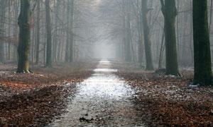 荒凉萧瑟林中小路风光摄影高清图片