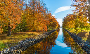 小河两岸的茂密小树林摄影高清图片