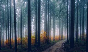 弥漫着雾气的树林自然风景高清图片