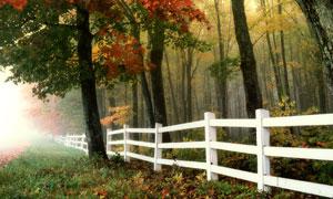树林草地分隔处的篱笆摄影高清图片