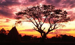 黄昏晚霞大树自然风光摄影高清图片