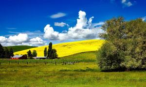 蓝天白云山坡农场风光摄影高清图片