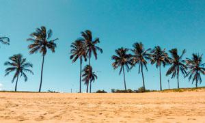 热带沙滩上的椰树风光摄影高清图片