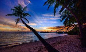 大海椰树黄昏霞光风景摄影高清图片