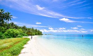 沙灘樹木與藍色的大海攝影高清圖片