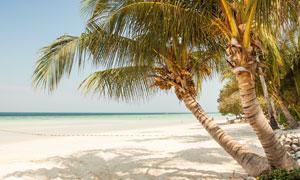 大海沙灘椰樹自然風光攝影高清圖片