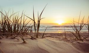沙滩上的杂草植物特写摄影高清图片