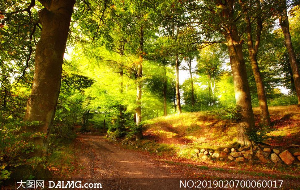 清晨阳光下的森林景观摄影图片