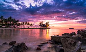 夕阳下的海边椰树和礁石摄影图片