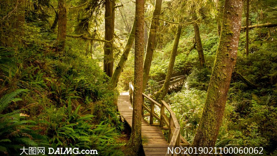 森林中的木桥高清摄影图片